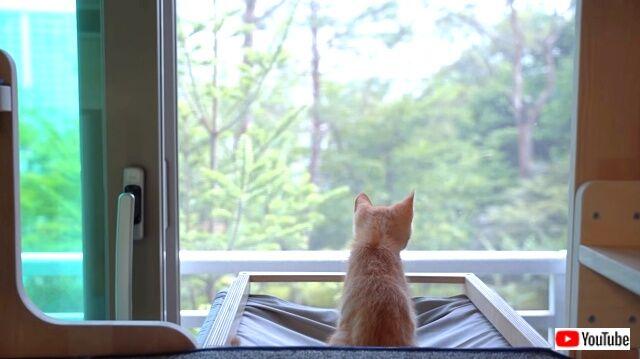 kittenissick5_640