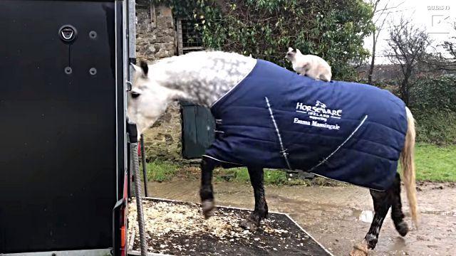 horseridingcat2