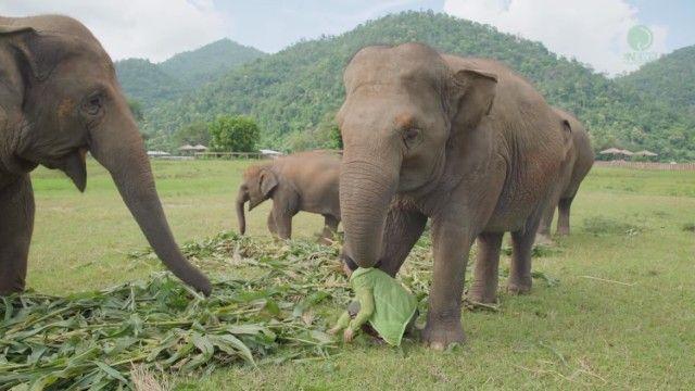 elephantsnbicycle3_e