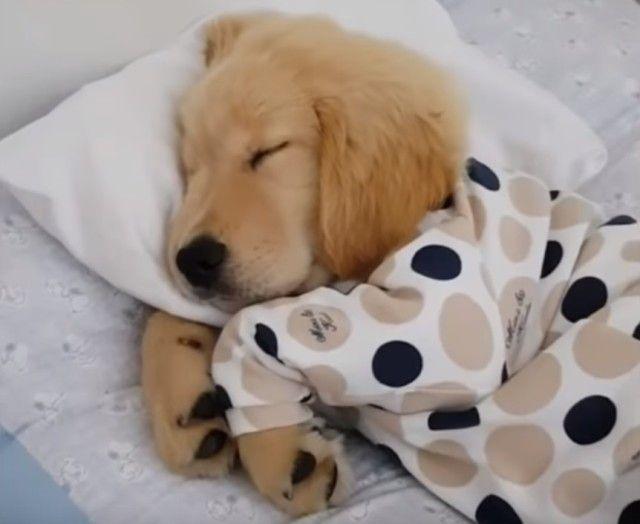sleepingpuppy1_e