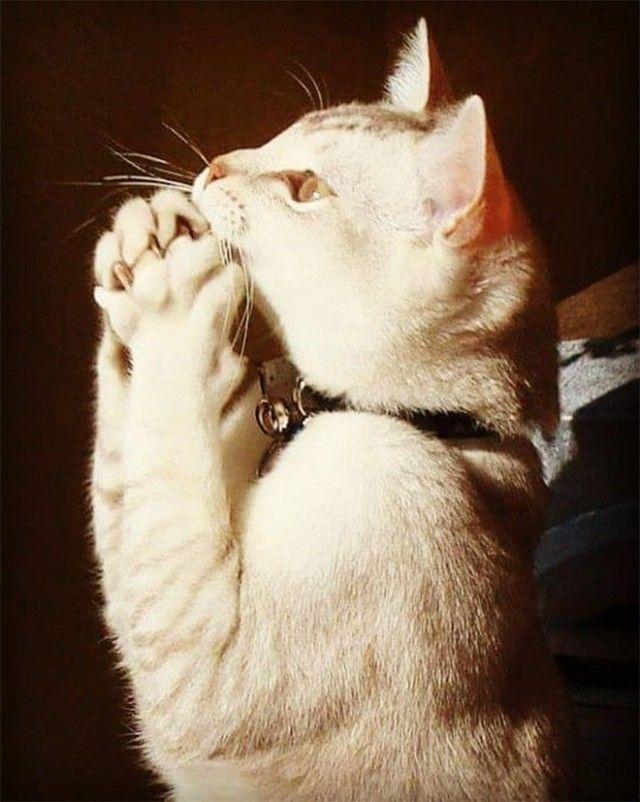 prayingcat11_e