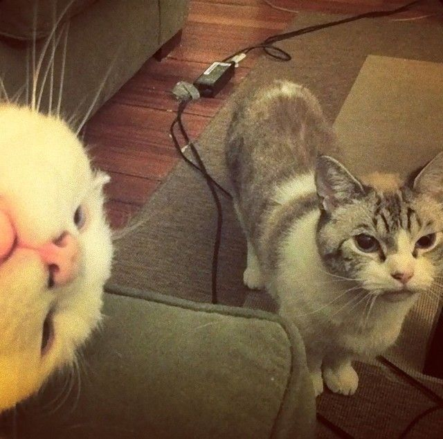 funny-cat-photobombs-38-58e39a833d791__605_e
