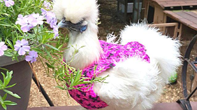 chick13_ea