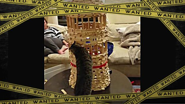 cattower0-frame