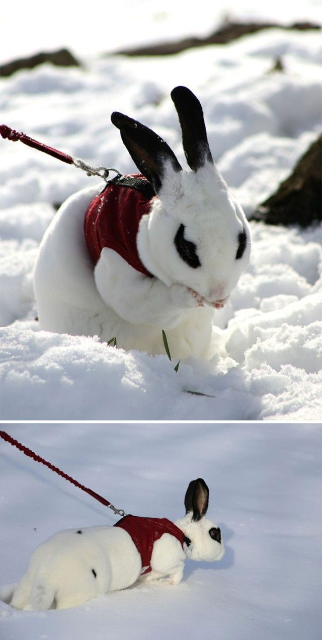 funny-animals-first-snow-cats-dogs21_e
