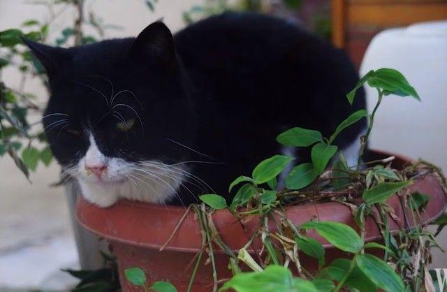 istanbulcats10_e