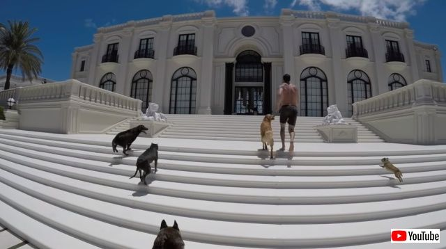 dogsnmansion1_640
