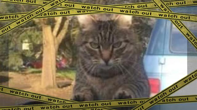 furycat1-frame