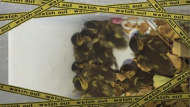 duck-5 [www-frame