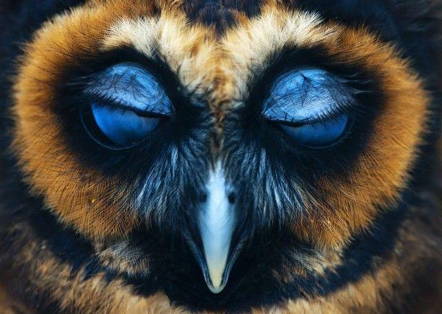 owl-photography-27__880_e
