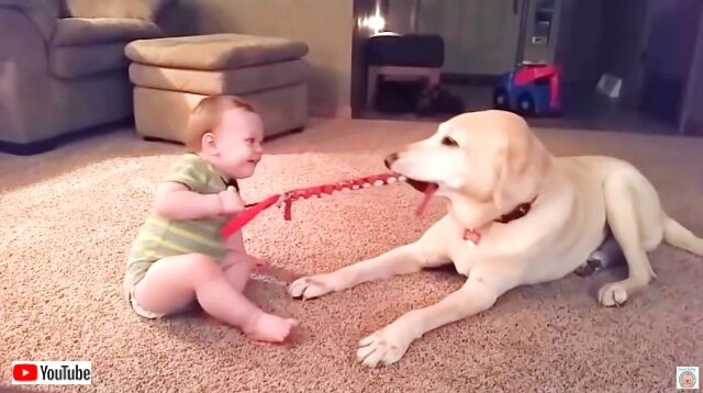 dogsnbabies5_640