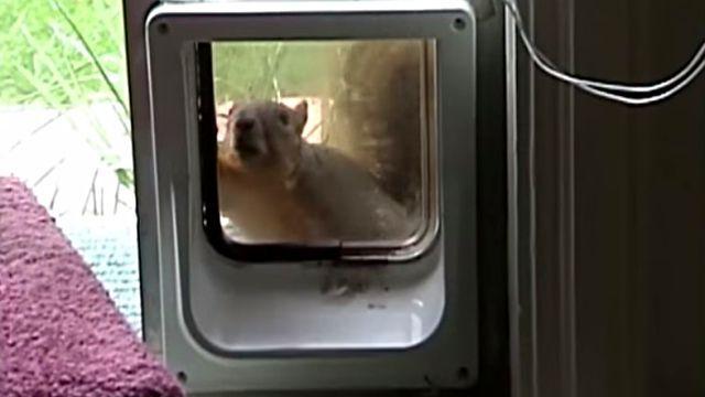 squirrelncat1