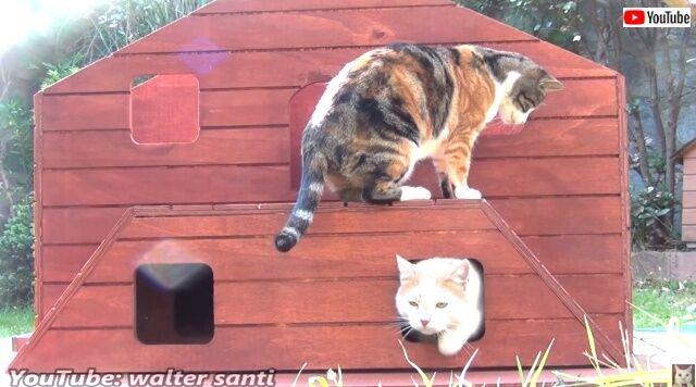 catshouse2_640