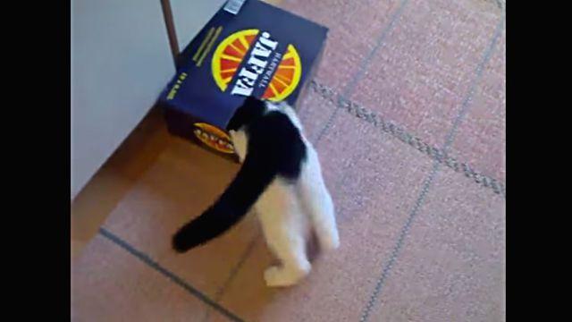 kittenbox2