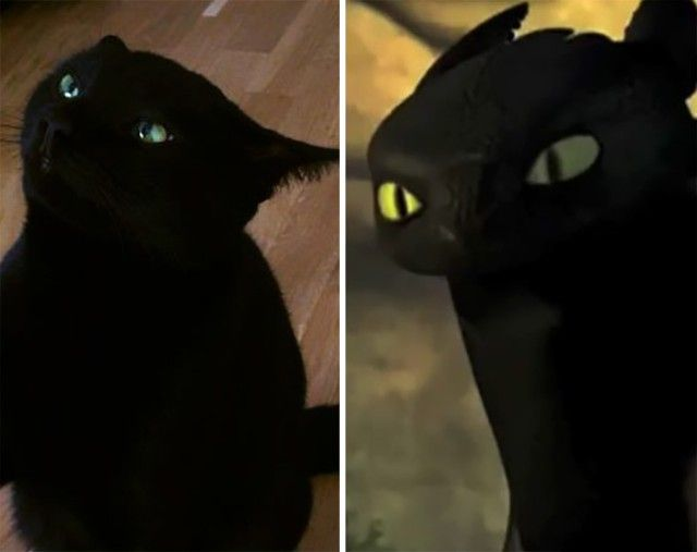 cats-toothless-lookalikes-19-57ce7f814d70b__700_e
