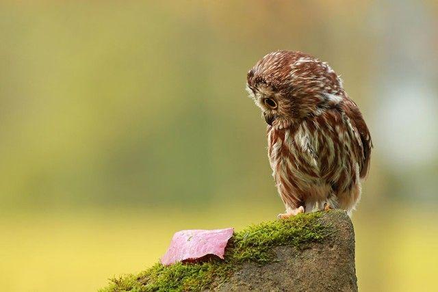 owl-photography-25__880_e
