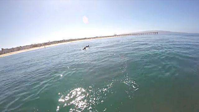 dolphinbodyslam1