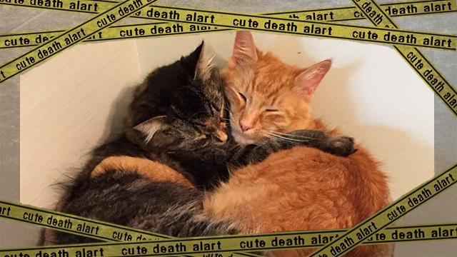 twocats4 [www-frame