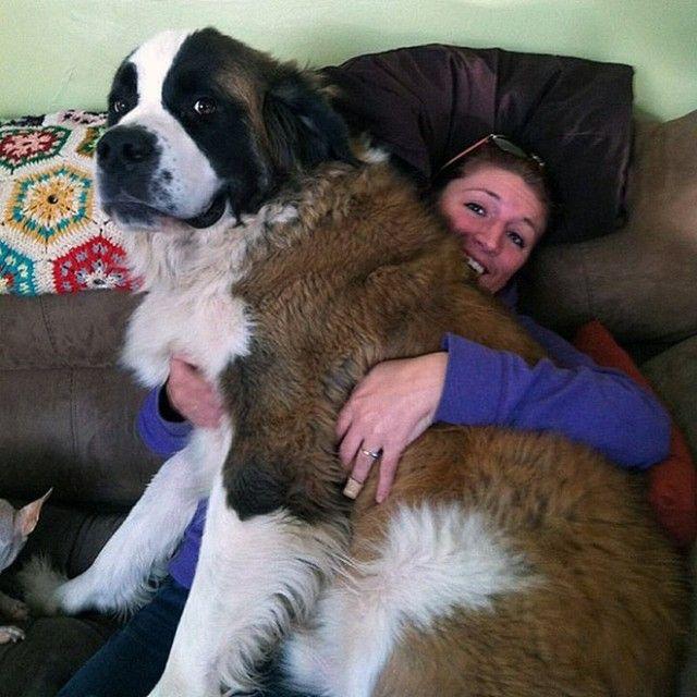 big-puppy6_e