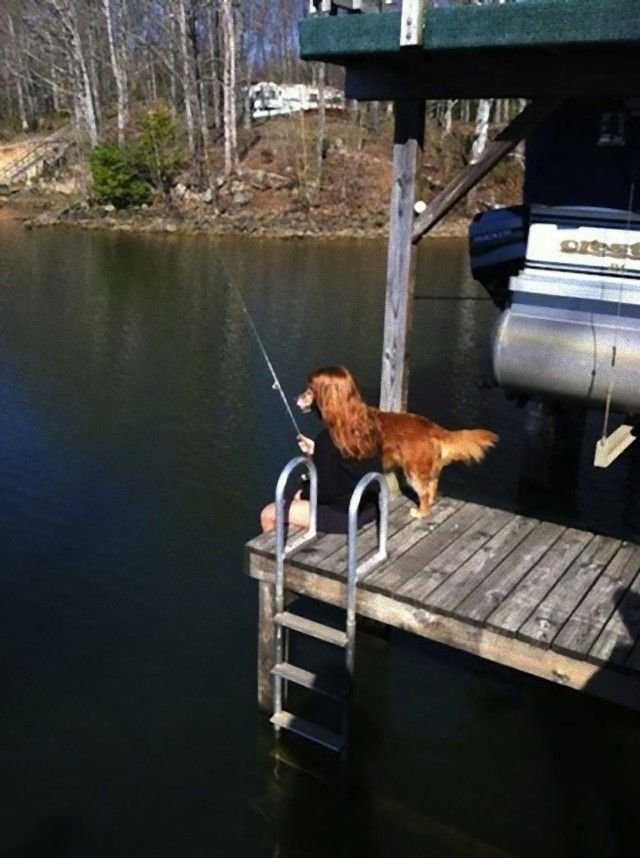 perfectly-timed-photos-dogs-16_e