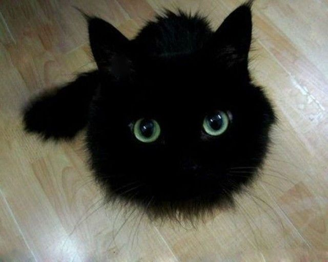 cats-toothless-lookalikes-3-57ce7b4a6f3e9__700_e