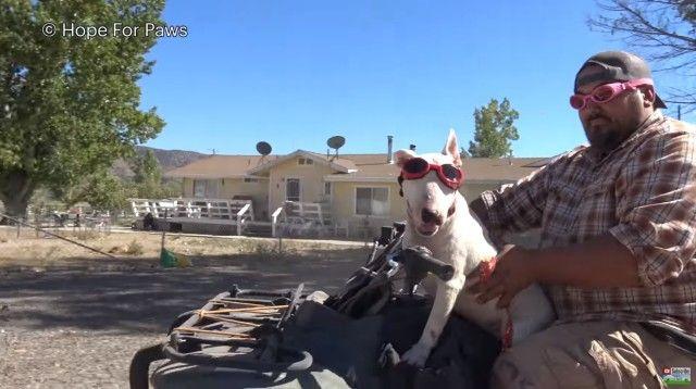 abandoneddogs9_e