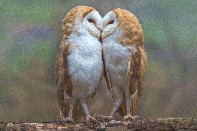Owls (1)_e