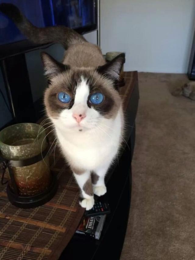 eyes-2 [www.imagesplitter.net]