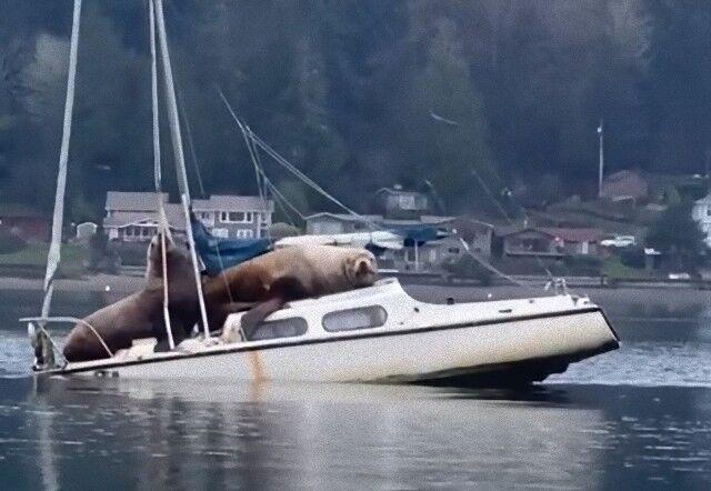 sealionsnboats1_e