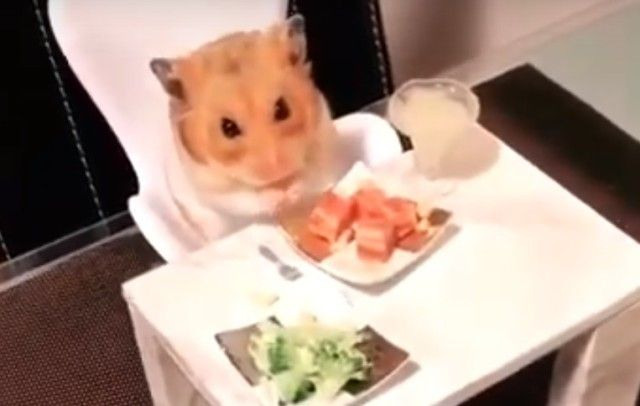 hamstersdate0_e