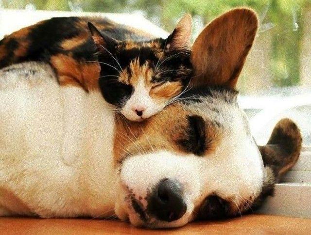 cuddle2_e