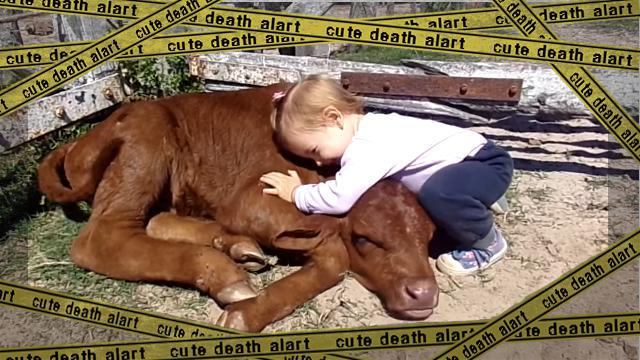 cow-f [www-frame