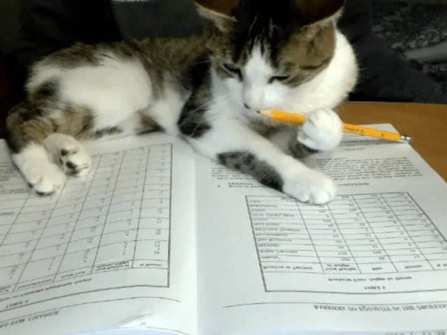 nonmorningcats11_e