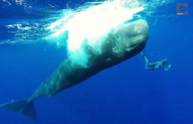whalespins1_e