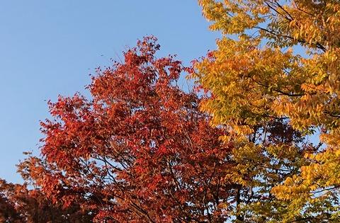 11月の樹②