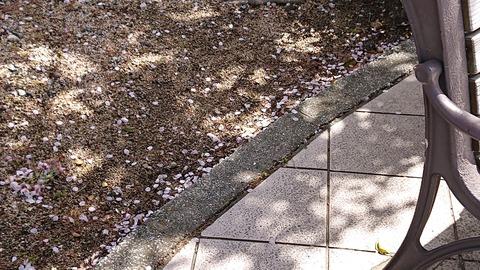 花びら絨毯②