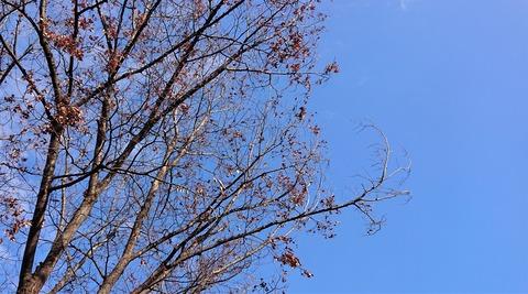 2020年1月の樹①