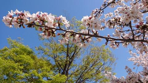 4月の空④
