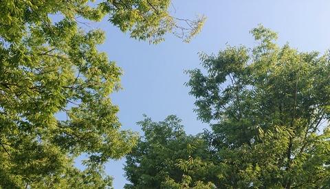 5月下旬の樹