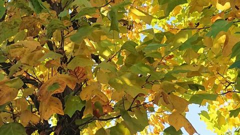 11月の樹①