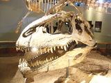 恐竜博001