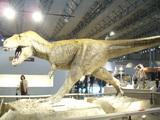 ティランノサウルス