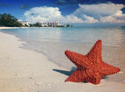 starfish-1122849_960_720