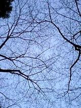 080322空桜