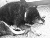 060524犬全身