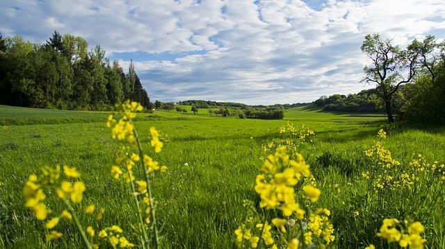 meadow-110717_640