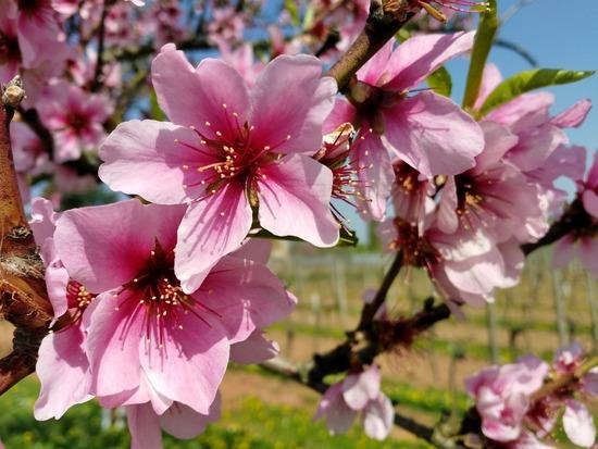 flower-3167499_1280