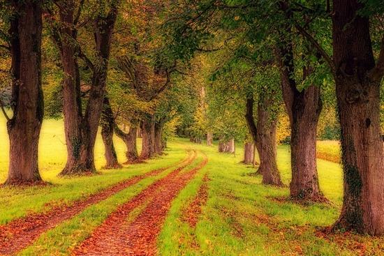 tree-3163913_1280