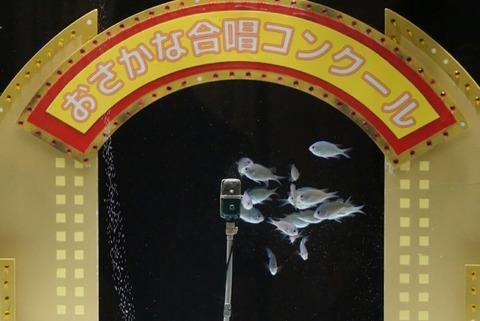 【横浜中華街】ヨコハマおもしろ水族館・赤ちゃん水族館【おさかな合唱ショーが楽しめちゃう!おもしろい工夫がいっぱいの水族館】