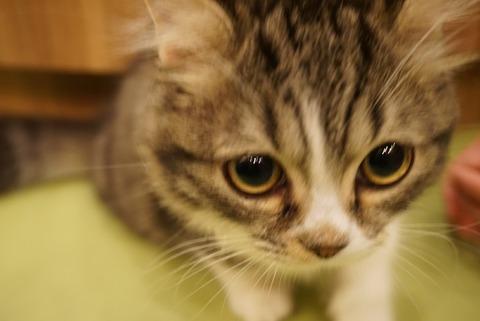 【秋葉原】猫カフェMoCHA 秋葉原店【短時間でも利用出来ちゃう!電源、ゲーム、漫画、更にこたつまである猫カフェ】